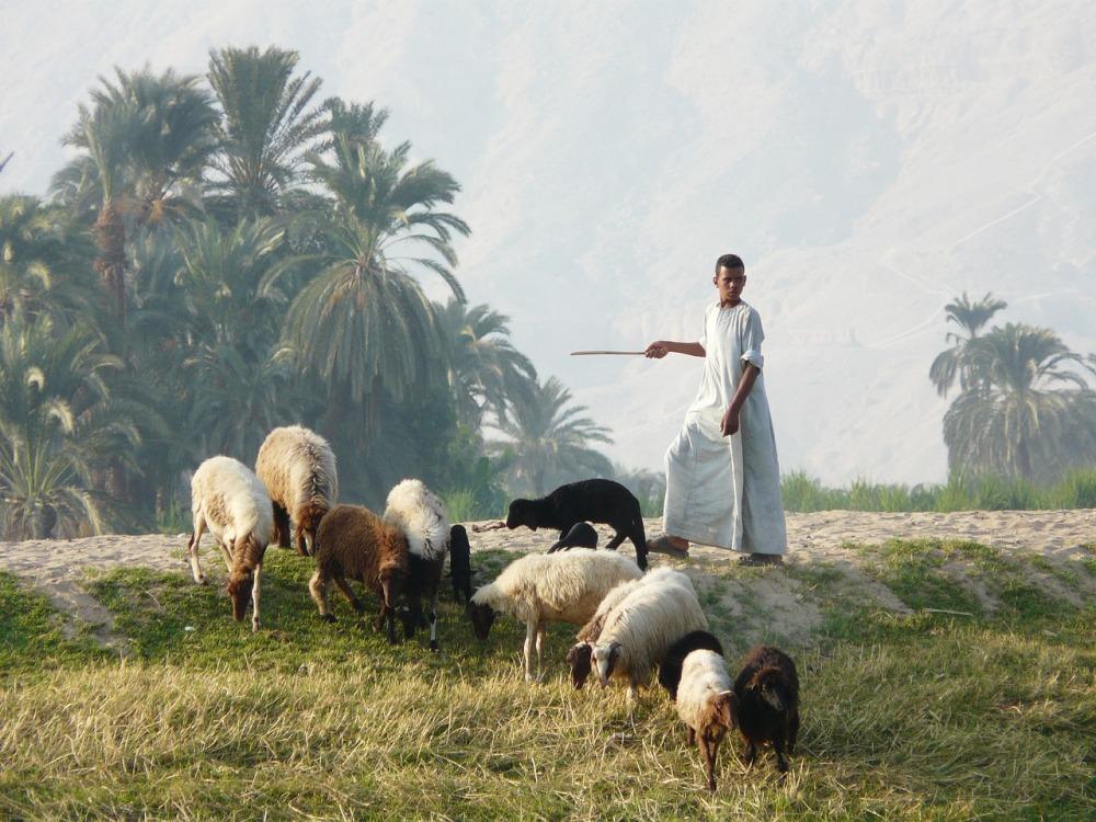 shepherd-1534713_1280.jpg